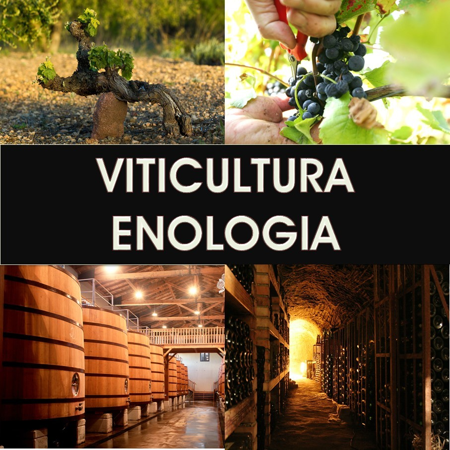 Viticultura - Enologia